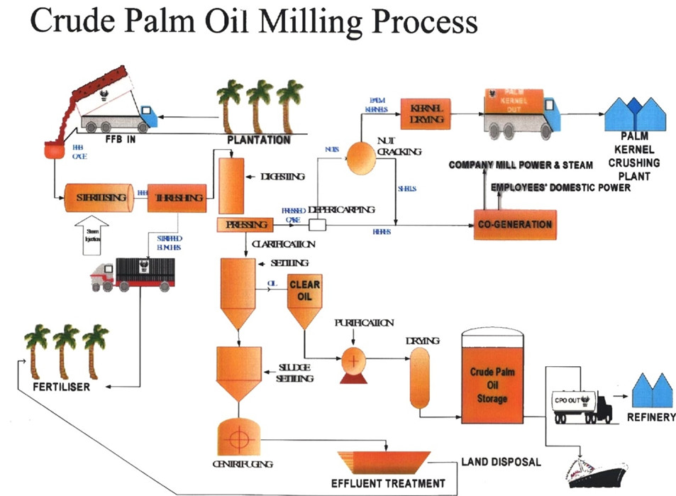 What Is The Detail Process Of Palm Oil Refinerytechnology Analysis