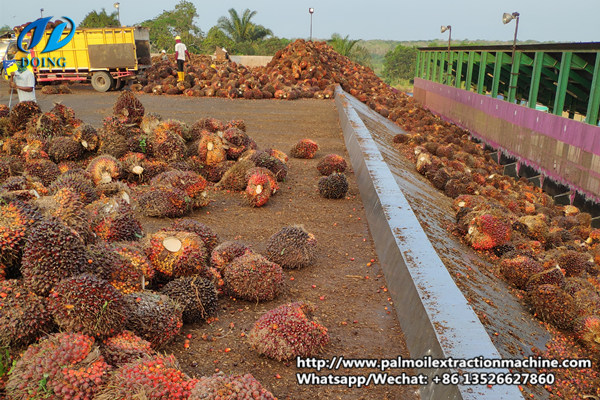 palm oil mill plant